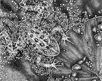 Frog Drawing, Framed Stipple Ink Drawing, Framed Original Art, Leopard Frog Original Art, Frog Duck Weed Framed Black and White Ink Drawing