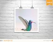 Sale 15% Hummingbirds Art, Pastel Bird Art, Bird in Flight, Bird Print, Hummingbird Photo, Wildlife Art, Nature Photography, Bird Photograph