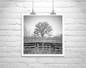 Fine Art Photography, Tree Art, Black and White, Nature Photography, Winter Art, Square Art, Square Print, Tree Photography, Minimalist Art