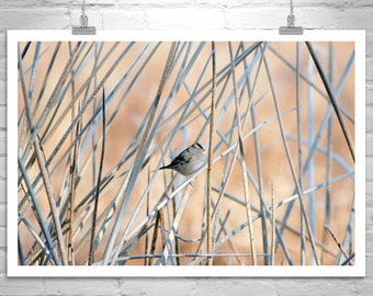 Abstract Nature, Bird Art, Fine Art Photography, Sparrows, Wildlife Photography, Wetlands Art, Nature Photography, Arivaca, Bird Print