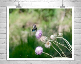 Butterfly Art, Nature Photography, Wildflower Picture, Insect Art, Garden Art, Swallowtail Butterfly, Art for Bedroom, Floral Art