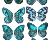 Digital Teal Butterfly Wings , insects, blue, vintage images, Collage Sheet