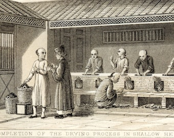 1870 Rare Antique Print of Tea - History of Tea - Tea Cultivation