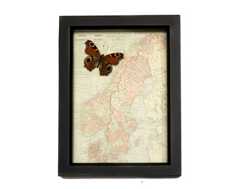 Vintage Map of Sweden and Norway with native Butterfly