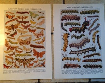 1947 European Moths and Caterpillars Vintage Illustrations