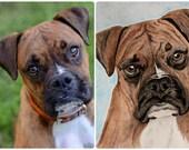 5x7 Custom Watercolor Pet Portrait (Dogs)