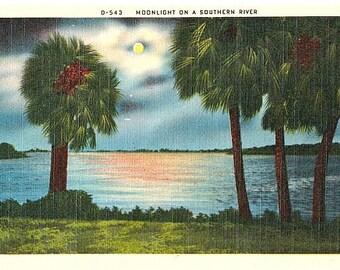 Vintage Postcard - Moonlight on a Southern River (Unused)