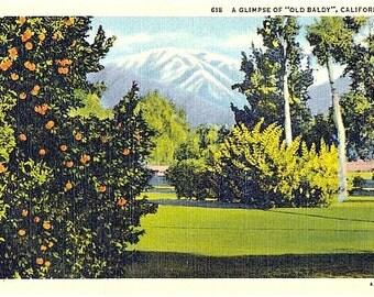 Vintage California Postcard - A Glimpse of Old Baldy (Unused)