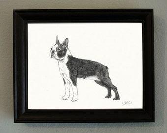 Original Boston Terrier Drawing in Simple Black Frame