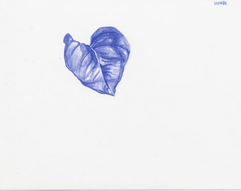 Blue Pothos Drawing 5