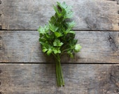 Italian Flat Leaf Parsley, organic herb seeds, heirloom seeds, herb garden, organic gardening, parsley seeds, container garden