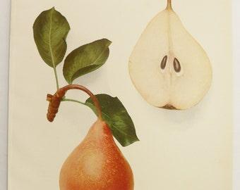 Vintage Pear Print 1921 Vintage Decor Fruit Print, Lincoln Coreless Pear, Kitchen Wall Art, Restaurant Decor, Food Art, Gift for Couple