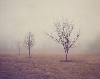 Winter Landscape Photography, Nature Print, Tree Picture, Fine Art Nature Photograph, Nature Home Decor, Wall Art, Bare Trees, Fog
