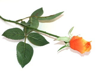12 Light Orange Gina Rose Buds - Barely Blooming - Artificial Flowers, Silk Roses - PRE-ORDER