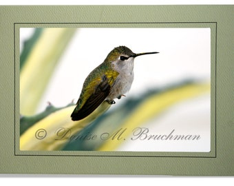 Calliope Hummingbird Photo Greeting Card - Custom Hummingbird Cards Blank Inside - Cards Hummingbirds - Blank Hummingbird Cards - Photo Card