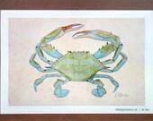 Blue Crab (11x17)