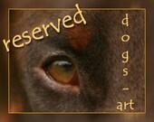 Dog Collar - Reserved for Giselle
