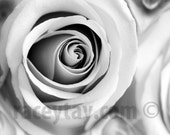 Black and White Flower Photography, Rose Photo, Gray, Bedroom Decor, Modern, Macro Flower, Large Wall Art