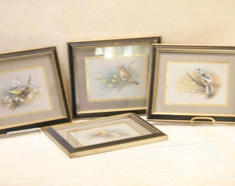 4 Framed Bird Prints Vintage Yellow Breasted Red Browns on Branches Signed EDE