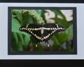Photo Greeting Card, Butterfly on Plant, Blank Inside