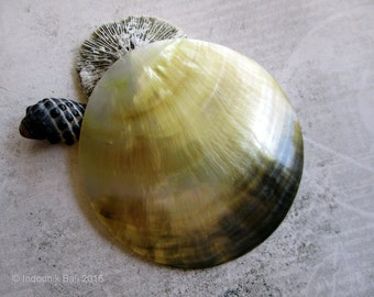 Sanur Sunrise Cabochon in Mother of Pearl Shell
