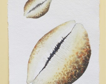 Cowrie sea shell watercolour original illustration painting ocean beach series collection