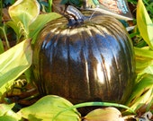 "10 Inch Artificial  Pumpkin. ""Black w gold Metallic Flake"" 10.00 Off list price. with a FREE pack of Pumpkinteeth."
