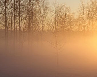 Fine art photography print, nature photography.  Winter Morning in Latvia.