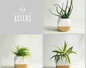 Air Plant Add-On (for Geometric Succulent Cactus Planters)