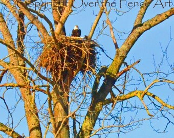 Eagle Nest In Tree  Blank Photo Greeting Card Warm Colors