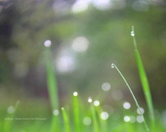 Spring, Freelensing, Freelensed, Green, Grass, Rain drop, Macro, Bokeh, Nature Photography