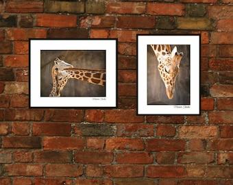 Wildlife Photography,mama giraffe and her baby,young giraffe,nursery print decor,loving,mom,baby,safari,wild animal,zoo animals,jungle decor