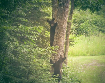Wildlife Photography bear cubs,nature photography,cute cubs,wild animals,bear in nature,forest landscape,fine art photography,wildlife decor