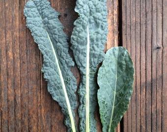 SALE! Kale Dinosaur Tuscan Nero Lacinato Black Kale Most Widely Used Variety Mild Flavor Seeds Best Seller