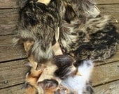 Raccoon, Coyote, and Fox Fur scraps
