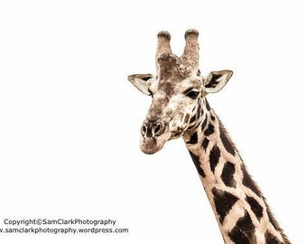 WILDLIFE PHOTOGRAPHY - Nursery Art, Animal Photography, African Wildlife, African Photography, Nature photography, GIRAFFE Photo