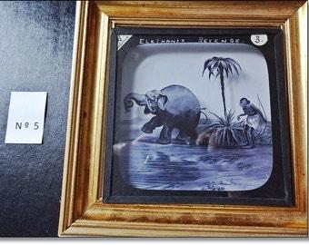 Magic Lantern Slide, Victorian Glass Slides, Victorian Toys, Elephants Revenge, Lantern Slides No. 5