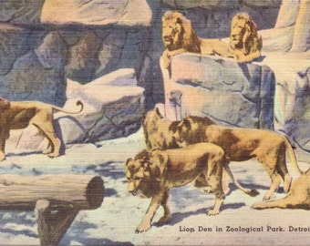 Detroit, Michigan, Zoological Park, Lion Den - Linen Postcard - Unused (A4)