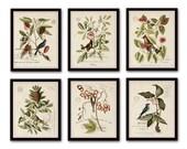 Vintage Bird and Botanical Print Set No.2 - Giclee Canvas Art Prints - Antique Botanical Prints - Wall Art - Prints - Posters - Mark Catesby