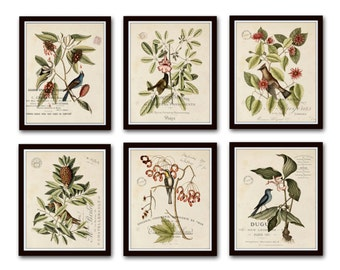 Vintage Bird and Botanical Print Set No.2, Giclee, Art Print, Botanical Prints, Wall Art, Mark Catesby, French Style, Collage, Bird Prints