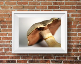 Food photography, still life photography, mushroom I, kitchen decor, bokeh photography, wall art decor, kitchen art, dining room art