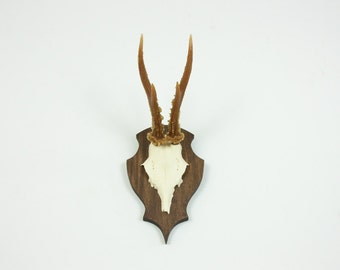 Brown Resin Antlers on Walnut / Animal-Friendly Faux Taxidermy / Small Roe Deer