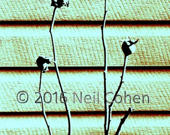 Dead Flowers Against Wall, Chicago fine art brown and green color archival inkjet photograph