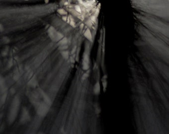 Dreamscape no15. Moonlight & Shadows, abstract moonlight, shades of grey, minimalist decor, abstract trees, fragments of light