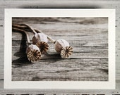 Poppy Seed Pods Photo Greeting Card, Still Life Photography, All Occasion Card, White Blank Notecard, Fine Art Photography, Photo Print