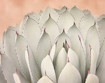 Succulent Photograph, Cactus Art Print, Cacti Picture, Peach and Sage Green Art, Modern Southwest Artwork, Desert Photo, Pink Nature Decor