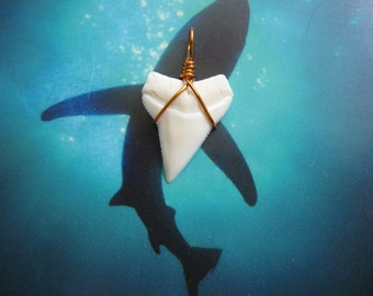 Shark Tooth Necklace Pendant, Modern Day White Shark tooth, Copper wire wrapped