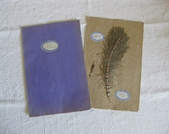 Antique French herbarium dated 1911 real dried botanical specimen