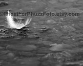 Black & White Feather Fine Art Photography Print Wildlife Nature Photo Pacific Northwest Decor Kids Nursery Wall Art