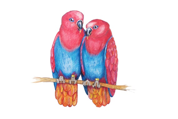 LIMITED EDITION of Two Eclectus Parrots, Art Print, Female Birds Confirming Their Bond, Homosexual Lesbian or Sister Bird Couple,